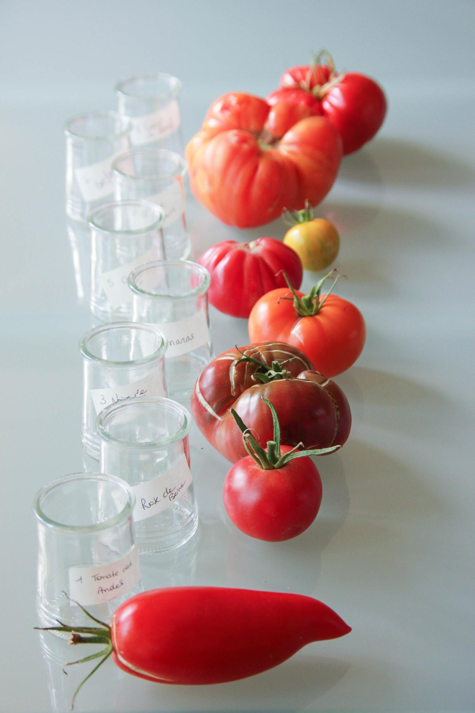 Variétés anciennes de tomates bio