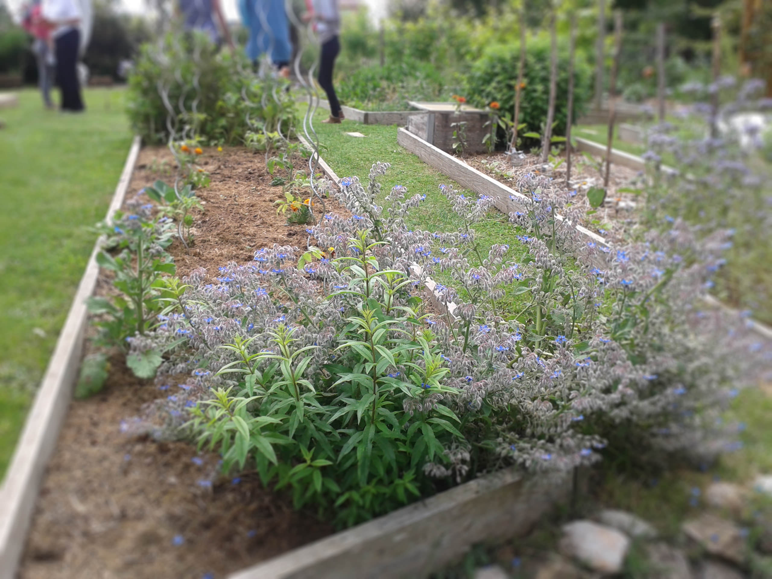 cours-permaculture-toulouse