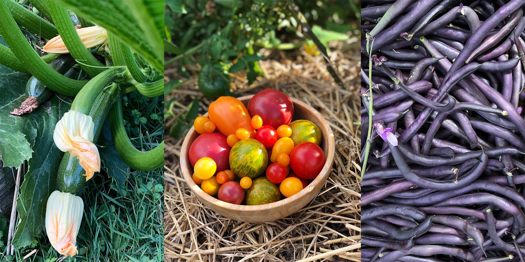 cultiver ses premiers légumes en permaculture